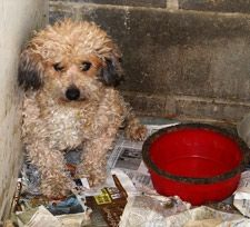 Life for a puppy mill dog is no life at all.  Please ADOPT.  Don't buy a dog from a pet store or the internet.