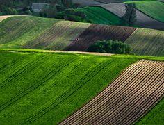 Przemysław Kruk, el fotógrafo de la onda, la curva,... agraria. | Matemolivares
