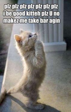 hahaha #cats #barexam