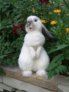 *NEEDLE FELT ART ~ OOAK Needle felted Alpaca Life Size Lop Ear Bunny Rabbit Poseable
