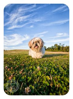 Bailey and Banjo Photography: love the perspective on this!