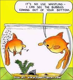 Funny toilets comedy in a fish farting cartoon with aquarium bubbles. A humor picture and funny flatulence comic strip bathroom joke. Funny Cartoons, Funny Jokes, Funniest Jokes, Gruseliger Clown, Funny Images, Funny Pictures, Funny Relationship Jokes, Animal Jokes, Funny Animal