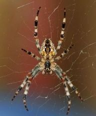 Fun Facts for Kids About Spiders -