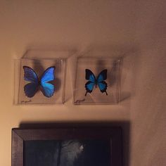 Liz Beaver added a photo of their purchase John does an absolutely beautiful job with butterflies I've purchased! I'm very pleased with my purchases!! butterfly display, mounted butterfly, butterfly art