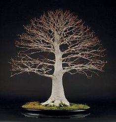 Types of Bonsai Trees - Shaping Aesthetics