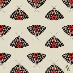 I decided to do the 30 days of illustration and turn them into patterns. The theme? Here's to Moth 01 Virgin tiger moth Grammia virgo 30 Day Drawing Challenge, Tiger Moth, Pretty Cool, Inktober, Virgo, Butterfly, Patterns, Drawings, Illustration