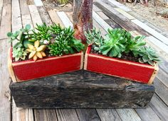 Succulent Boxes, Succulents, Plants, Succulent Plants, Plant, Planting, Planets