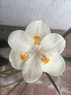 Nuestra flor...