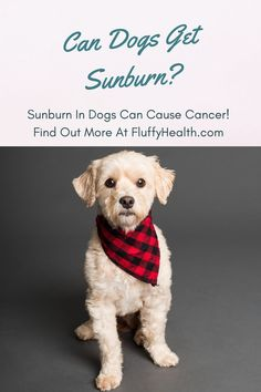 Can dogs get sunburn? Well, it is summer, and it is so hot everywhere! Most dog owners want to go outside so often to enjoy this weather with their dogs. The question can dogs get sunburn is vital to protect your dog from complications that will affect your dog's health, as we will mention later on. Read more... #dogs #summer #sunburn #fluffyhealth #doghealth #doglife #doglover Lightroom, Photoshop, Dog Photos, Dog Pictures, Pets, Pet Dogs, Weenie Dogs, Doggies, Prager Rattler
