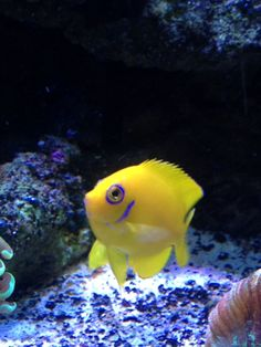 Lemon Peel fish.