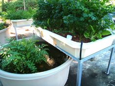 Farming Agriculture Supply Shop Malaysia - Aquaponic, Fish, Plant, Design, Economic, Grow Bed, Nitrogen Cycle, Nutrient, Hydroponic,Education
