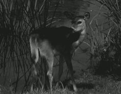 Bambi by the creek animals water animal gifs gif bambi animal pictures creek