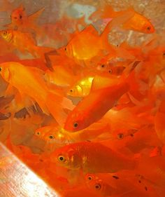 Living in a fish bowl by Pfish44, via Flickr