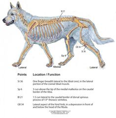 k-9 CCL injury copy