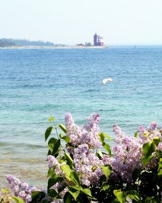 want to go .. Mackinac Island Lilac Festival