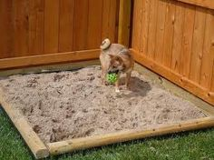 sandbox for digging dogs - Google Search