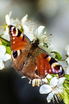 Fotograf Butterfly von Georg Korzun auf 500px
