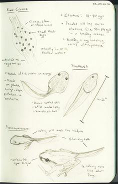 Image result for naturalist journal