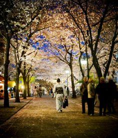 Kyoto, Japan  (photo from stuckincustoms.com)
