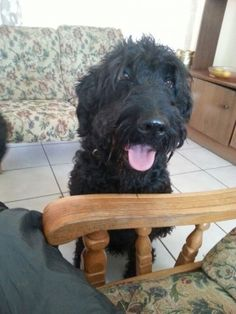We have one black male labradoodle puppy left. He is almost 10 weeks old. Very playful and loving. He has curly hair. He has been dewormed and vacci... | 66870944