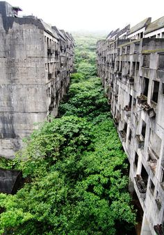 ruins swallowed by nature, taiwan