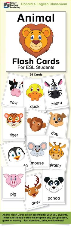 Animal Flash Cards are an essential in any ESL classroom! These colorful and kid-friendly cards are perfect for your Pre-k and kindergarten classes. $3 on TpT #EFL #ESL #ELL