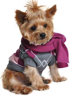 Warm & Cozy Purple Plaid Argyle Dog Sweater with Scarf Set