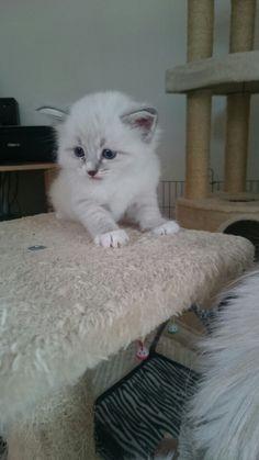 A New kitten on arrival in september