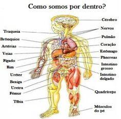 Queres saber como é o teu corpo por dentro? Aprende o vocabulário.