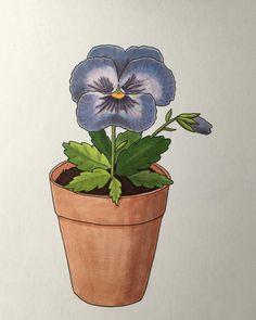 705 vind-ik-leuks, 16 reacties - ♡ Plants & Illustrations ♡ (@drawingplantlady) op Instagram: 'Violet drawing '
