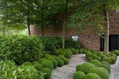 english yards gravel boxwood balls - Google Search