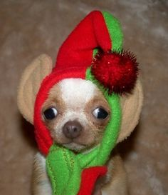 Christmas Elf Holiday Hat for Dogs and Cats Size by hatz4brats, $28.00 ( awe)