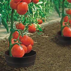 Aquaring 5er-Set - diverse Bewässerungsartikel Bewässerungs-Systeme - Beckmann KG - Ihr Spezialist für Gewächshaus und Gartenartikel