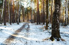 """https://flic.kr/p/FvahJo   Spring landscape. Cold morning. """"In the forest paths."""""""