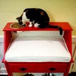 Ghetto Secretary Desk= Awesome Cat and Dog Food Station