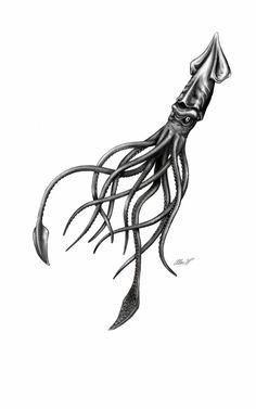 ... Squid tattoo on Pinterest   Cthulhu tattoo Kraken tattoo and Octopus
