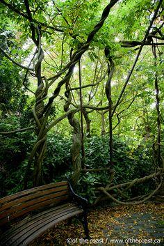 Kew Gardens secret gazebo