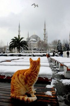 Winter in Istanbul - Orange tabby cat I Love Cats, Cute Cats, Animals And Pets, Cute Animals, Foto Blog, Red Cat, Orange Cats, Turkey Travel, Ginger Cats