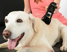 Bcure Laser VET  Home Laser Therapy for Animals Accelerates Healing and Reduces Pain and Inflammation For Dogs Cats Horses Cows and Other Animals *** Be sure to check out this awesome product.