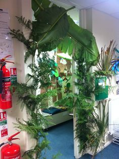 Real rainforest classroom! Love the entrance way!