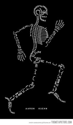 Skeleton Typogram, A Human Skeleton Illustration Made Using The Words For Each Bone. Nursing school just got a little easier Anatomy Bones, Anatomy Art, Yoga Anatomy, Animal Anatomy, Anatomy Study, Anatomy Reference, Greys Anatomy, Human Skeleton, Skeleton Art