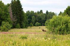 <b>Västmanlands län - Slagårda </b><br /> Slagårda är ett mycket fågelrikt skogsområde med sex ugglearter, vilka behöver boträd och skydd av skog. Andra arter är bland annat bivråk, duvhök, tretåig hackspett, mindre hackspett, orre, tjäder och järpe.