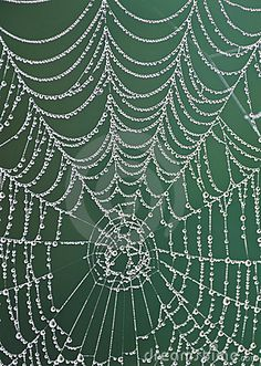 Webs, created with great skill, serve well.  Then, when seemingly useless, morning dew reveals their beauty.  It's time for a new web, inspired and fed by beauty and gratitude.