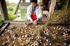 Ever wondered: hardneck or softneck? How do I grow garlic? Can I sell it profitably as a crop on my small farm? Find out the answers to all your garlic growing questions.