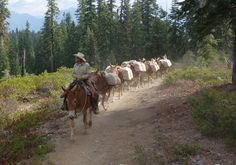 """US Forest Service to """"Keep it Wild"""" with Historic Mule Pack Trains Us Forest Service, Camping Packing, Community Events, Sierra Nevada, Paths, Hunting, Horses, Donkeys, Animals"""