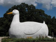 "This 8 ton, 30' long, 20' high duck, is in Flanders, Long Island.  Friends used it on their ""Save the Date"" e-card.  Apparently, it's a duck museum and gift shop, carrying all things duck!"