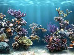 Aquário com corais