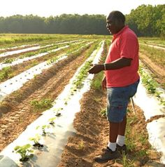 SAAFON: The Southeastern African-American Farmers Organic Network (SAAFON) is a network of farmers using sustainable growing methods. The Network is comprised of small and limited resource farmers that are either certified organic or growing organically. Currently SAAFON farmers are located in six states and the Virgin Islands: Alabama, Georgia, Florida, Louisina, North Carolina, South Carolina, and St. Croix Island.
