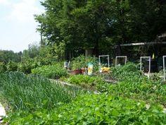 How Covid 19 is Changing our 2020 Garden - Gardening Jones Planting Potatoes, Seed Starting, Flower Beds, Vegetable Garden, Farmer, Writers, Seeds, Gardening, Vegetables