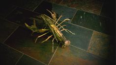 Driftwood lobster : )